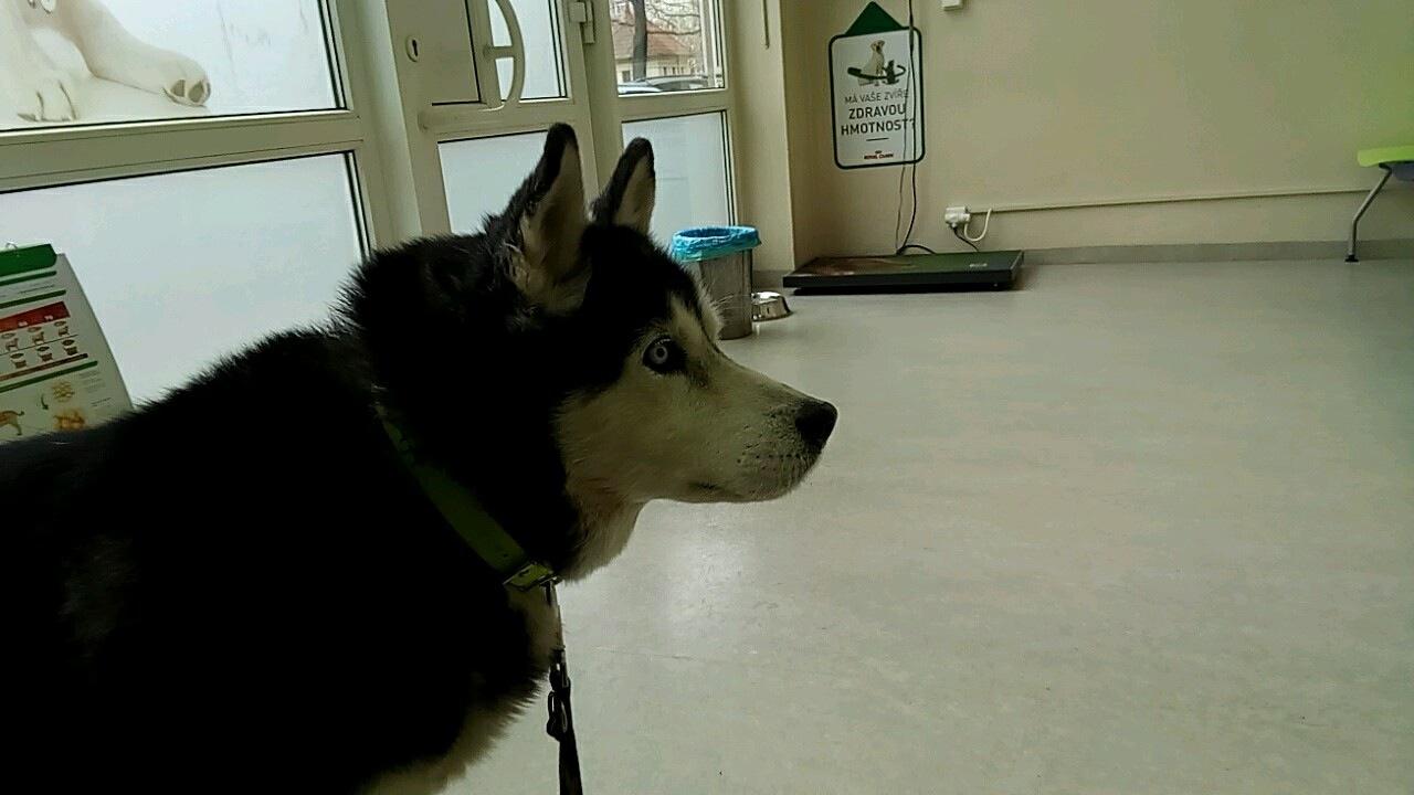 Veterinární klinika Pet Care Clinic